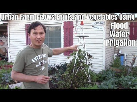 Urban Farm grows Fruit Trees & Vegetables with Flood Water I