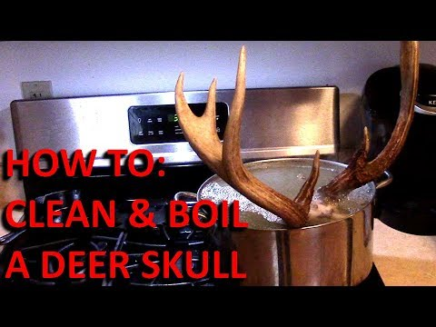 Boiling A Deer Skull For European Mount (Part 1)