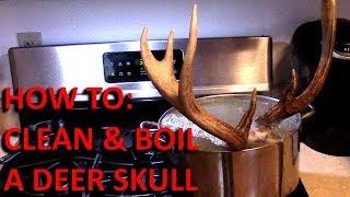 Clean and Boil A Deer Skull For European Mount