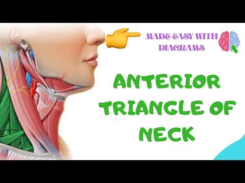 Anterior triangle of