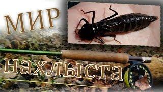 Личинка стрекозы из реки впадающей в Волгу - Мир нахлыста