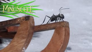 Minuscule - The sled and the ant / La luge et la fourmi (Season 2)