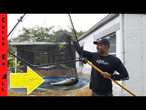 GIANT NET to Transport BIG FISH to Bigger AQUARIUM POND!