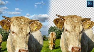 Remove background in seconds - Photoshop Tutorial Anthony Lam Photography Edits