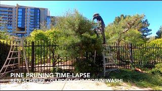 Niwaki Pine Pruning Time-Lapse - Japanese Gardening Techniques