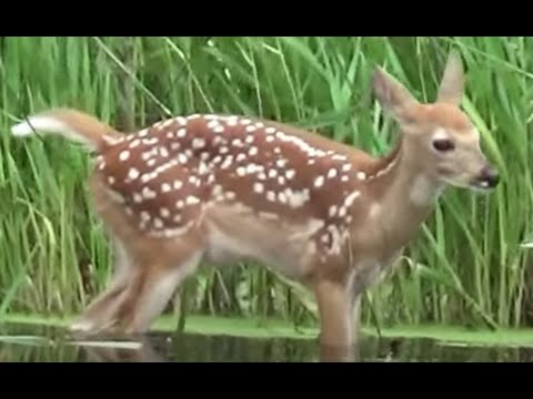 Relaxing 4 Hours ! 100's of Animals, Birds, Stunning Scenic Outdoors Minnesota in HD !