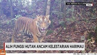Alih Fungsi Hutan Ancam Kelestarian Harimau