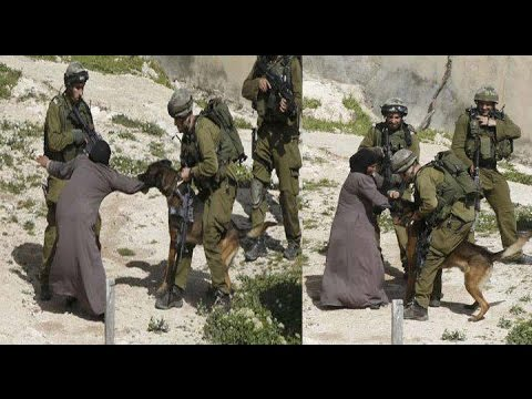 Israel  (IDF) using attack dogs on Palestinian Women - Human Rights Violation | Free Palestine