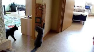 Когтеточка. Кошки играют с когтеточкой.