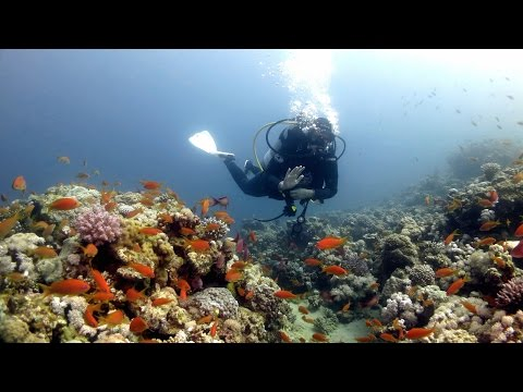 Scuba Diving Red Sea - Dive Sites of Dahab (Egypt 2015)