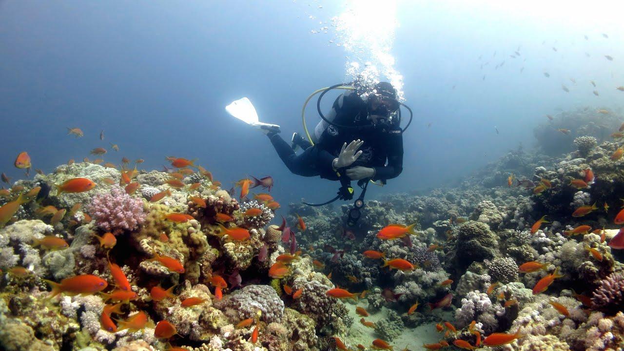 Dive Sites Of Dahab (Egypt 2015