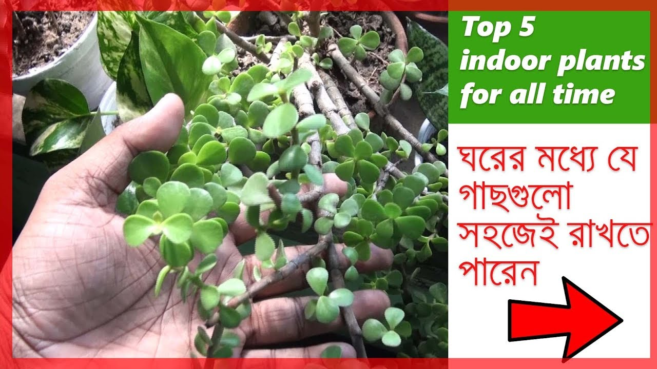 Indoor Plants For Low Light Best Indoor Plants Low Light Indoor Plants Best House Plants Top 5 Indoor Plants In Bengali
