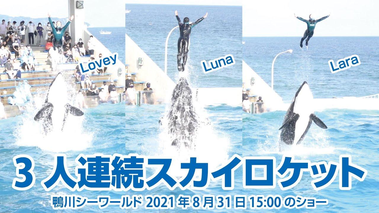 3人連続スカイロケット【2021年8月31日15:00のショー】Orca performance, Kamogawa Sea World, Japan