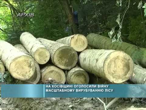 На Косівщині оголосили війну масштабному вирубуванню лісу