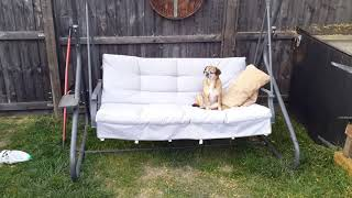 Lola on HER swing chair. #lola #pugalier #summer #fun