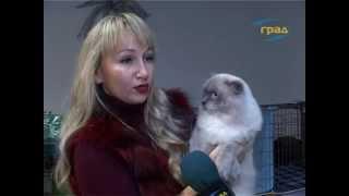 Выставка котов в Одессе