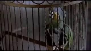 Korkunç Bir Film efsane papağan sahnesi