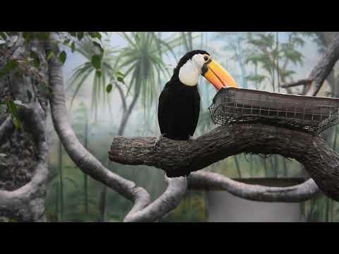 An eating toco toucan