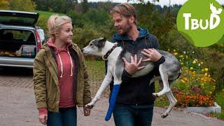 Hundstage (Folge 67) | Tiere bis unters Dach | SWR Kindernetz