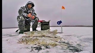 Зимняя Рыбалка.Полный Отрыв. Первый Лёд Продолжается!!! Щучье ЭЛЬДОРАДО.