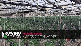 Growing Exposed Season 1 Episode 7 - Acres Upon Acres