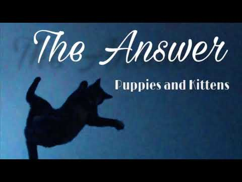 The Answer - Puppies and Kittens