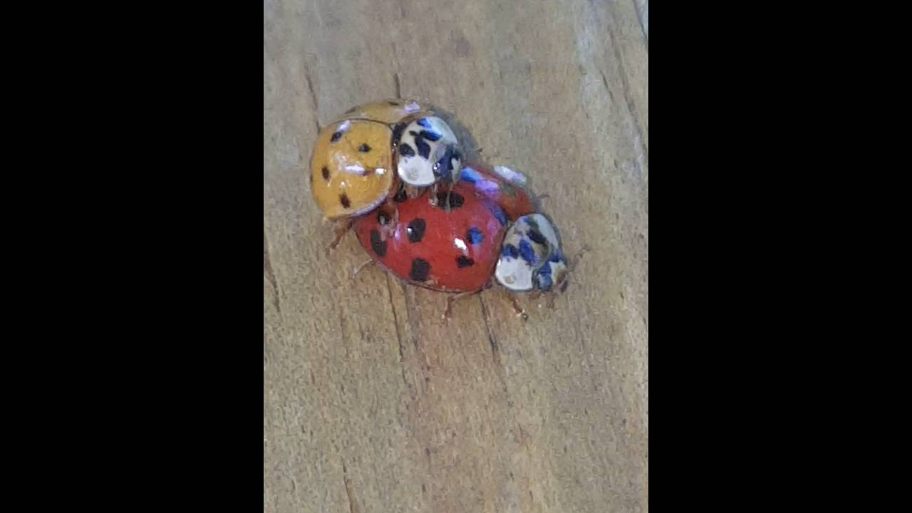 Beetlejuice porno