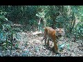 Kaydoh Mae Nyaw Wildlife Sanctuary (English Subtitle)