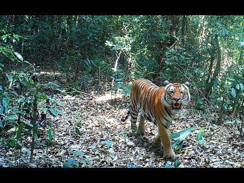 Kaydoh Mae Nyaw Wildlife Sanctuary (English Subtitle)