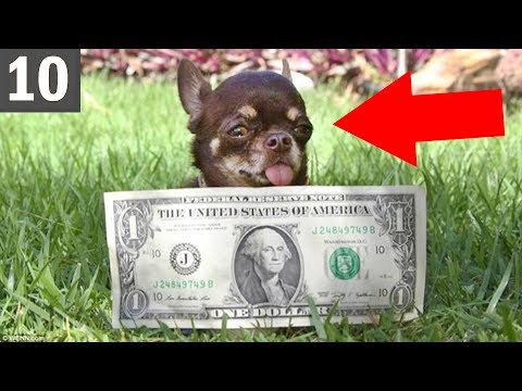 10 UNBELIEVABLY small dogs