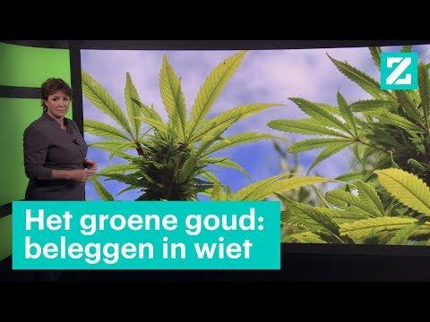 het groene goud beleggen in cannabis b z zoekt uit