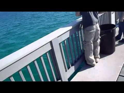 Kayak Meets a Huge Basking Shark