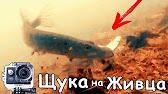 Торф купить для посадки растений оптом в украине. Кислый верховой торф для посадки голубики продажа в украине. Фрезерный верховой торф.