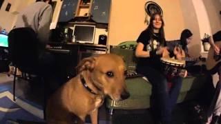 Животные в музыке