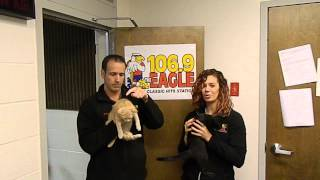 Dave and Jenna from 106.9 the Eagle Morning Show Accept the 2015 Polar Bear Plunge