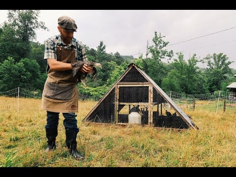 Turkeys Graduate to Pasture