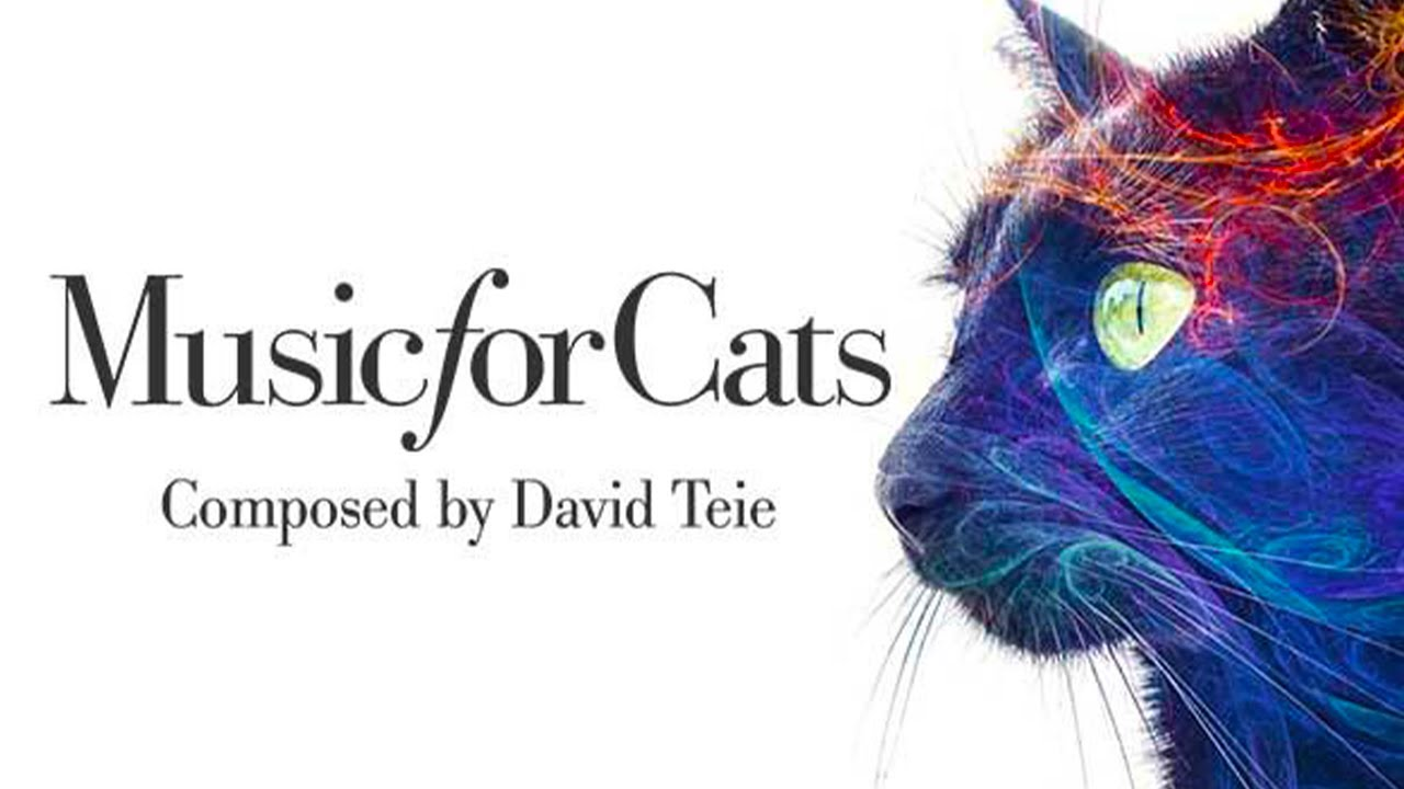 David Teie Music For Cats Youtube