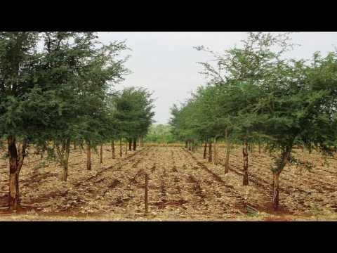 Regreening Africa's landscape - Trees as natural fertiliser