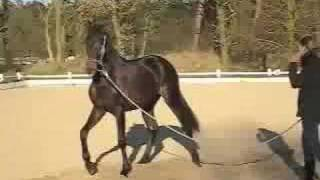 das liebe mädchen und das wilde pferd
