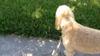 Train Your Dog To Stay In The Boundaries Of His Yard