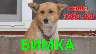 Наша собака Бимка