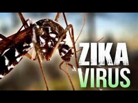 World Health Organization declared ZIKA VIRUS a global emergency Breaking News February 2016