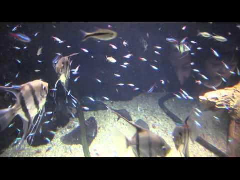 Osaka Aquarium Kaiyukan 大阪海遊館
