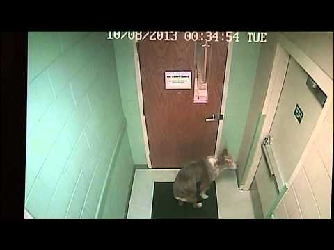 Dog Named Houdini Escapes Shelter