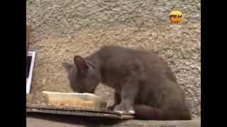 17 августа — Всемирный день бездомных животных