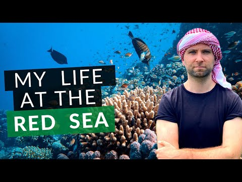 My life at the RED SEA (exploring Aqaba, Jordan) حياتي في ال
