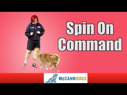 Dog Tricks: Teach Your Dog To Spin On Command
