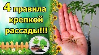 видео Выбор и посев семян
