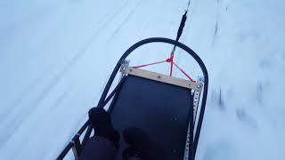 Finland 2016 Part 2 - Sled dog