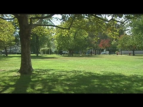Northampton launches shade tree inventory